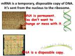 mrna is a temporary disposable copy of dna it s sent from the nucleus to the ribosome
