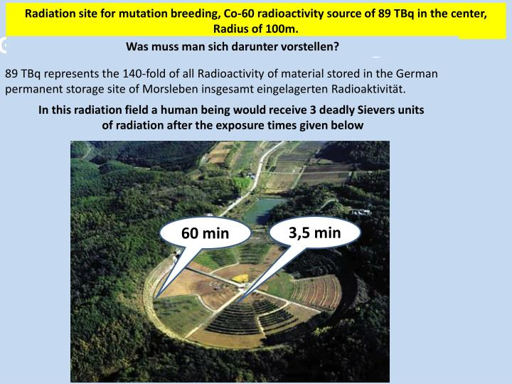 Radiation site for mutation breeding, Co-60 radioactivity source of
