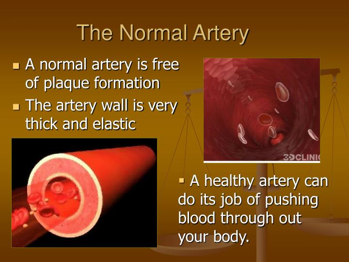 The Normal Artery