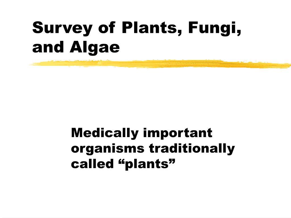 ppt survey of plants fungi and algae powerpoint presentation