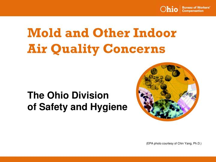 mold and other indoor air quality concerns n.