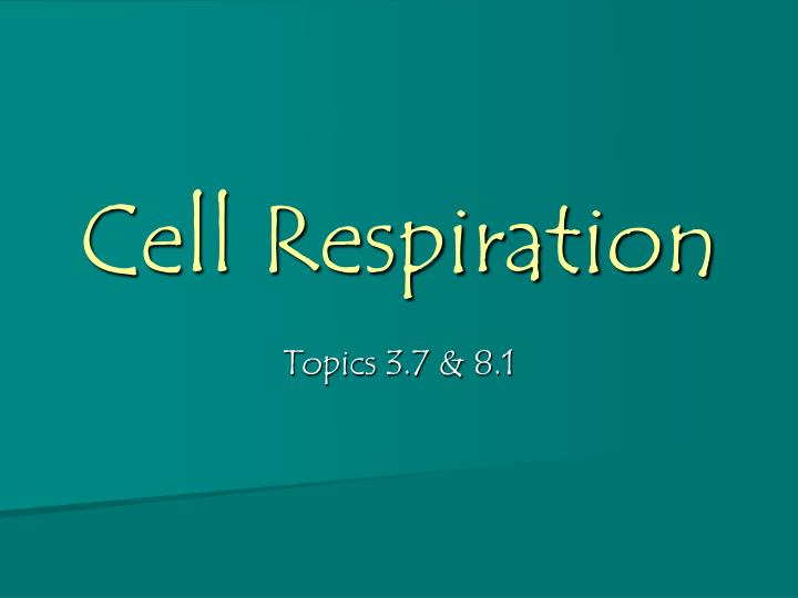 cell respiration n.