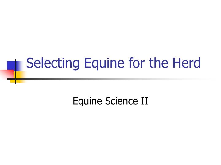 selecting equine for the herd n.