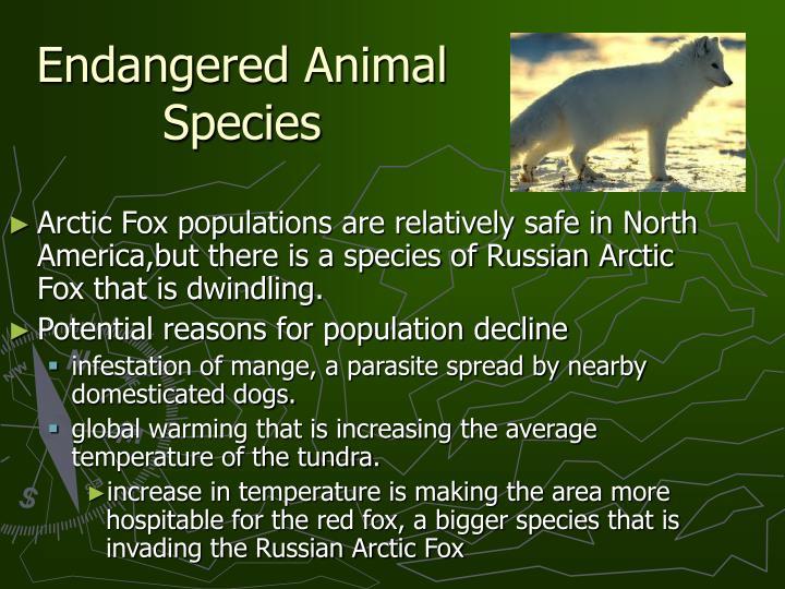 Endangered Animal Species