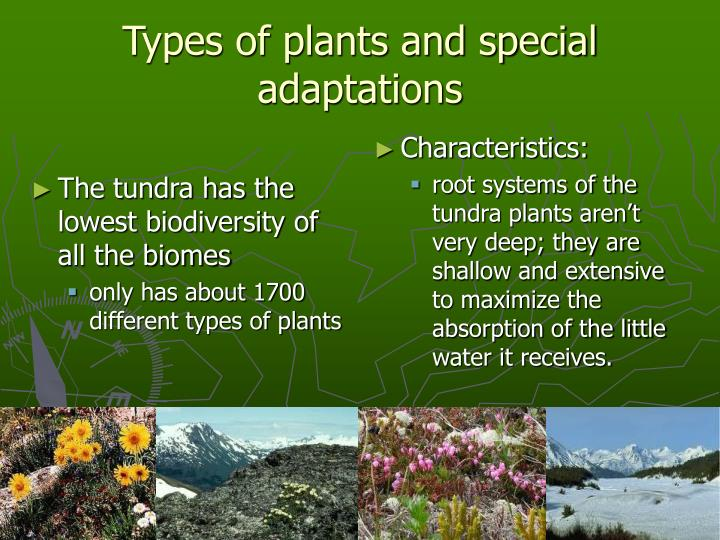 The tundra has the lowest biodiversity of all the biomes