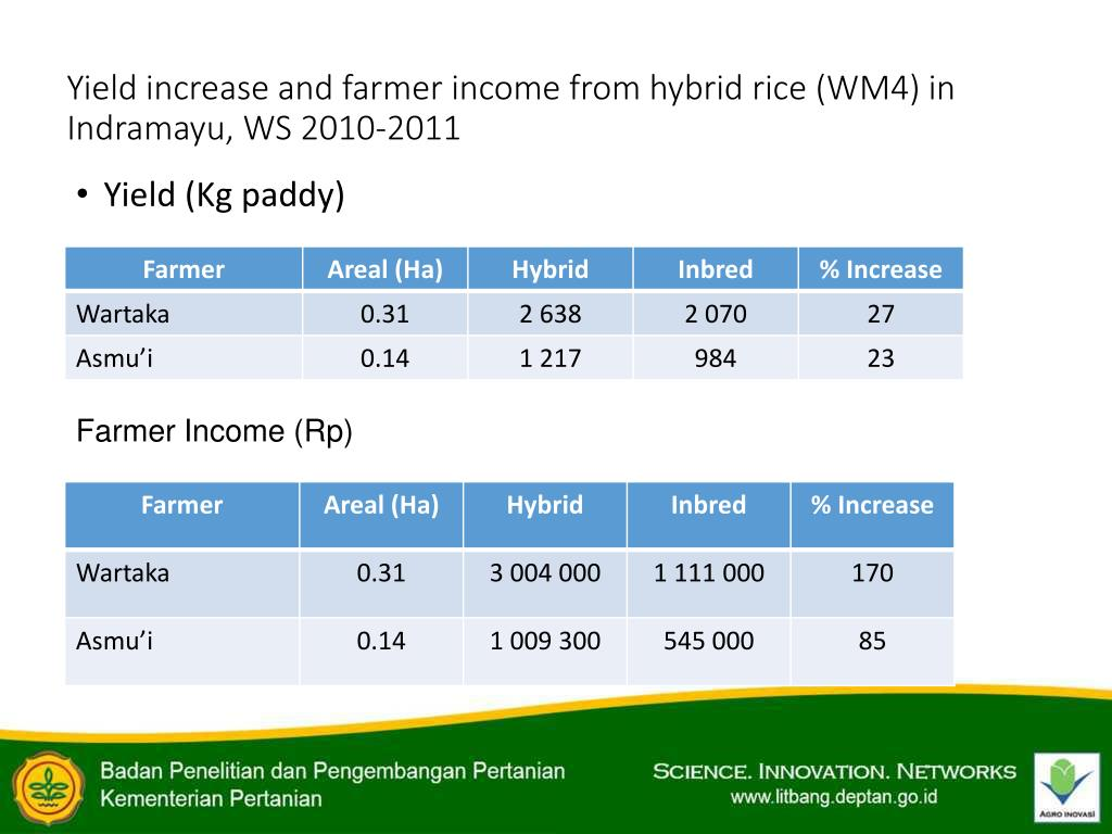 PPT - HYBRID RICE DEVELOPMENT IN INDONESIA PowerPoint