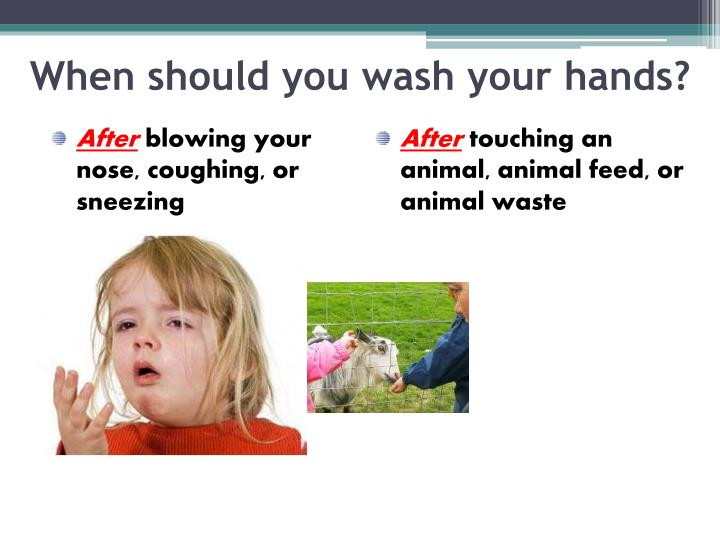 When should you wash your hands?