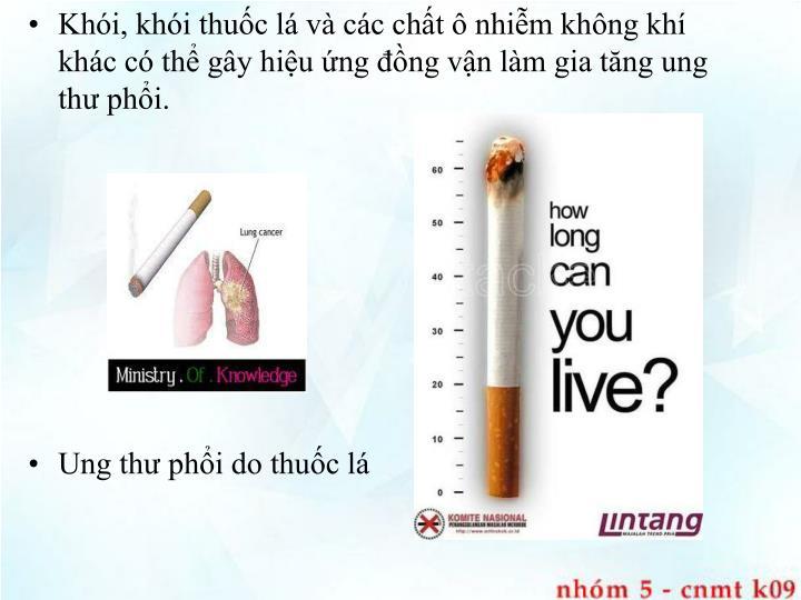 Khói, khói thuốc lá và các chất ô nhiễm không khí khác có thể gây hiệu ứng đồng vận làm gia tăng ung thư phổi.
