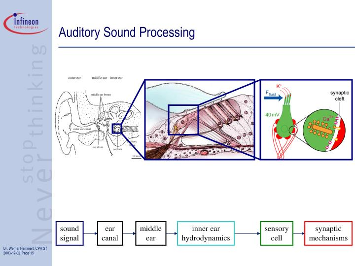 Auditory Sound Processing