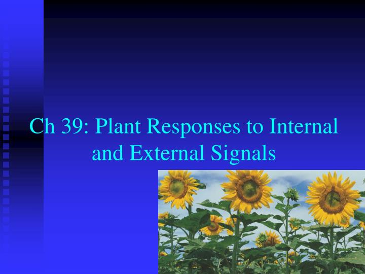 ch 39 plant responses to internal and external signals n.