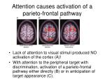 attention causes activation of a parieto frontal pathway