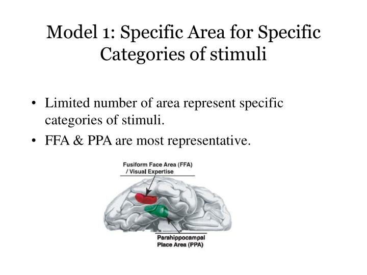Model 1: Specific Area for Specific Categories of stimuli