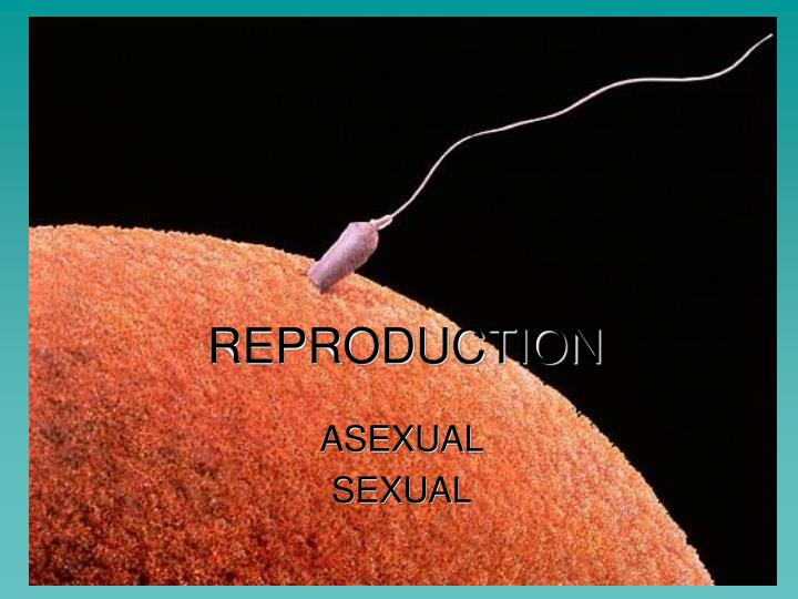 Biotopics asexual reproduction budding