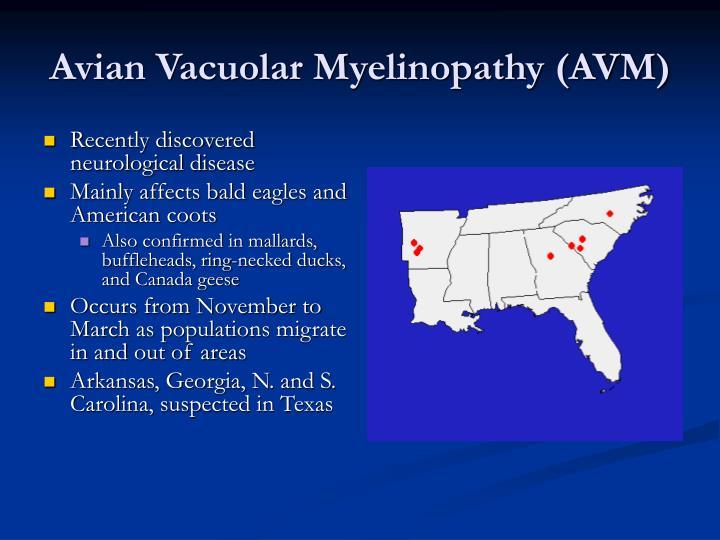 Avian Vacuolar Myelinopathy (AVM)