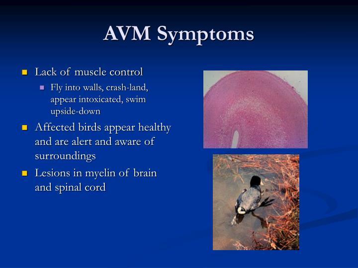 AVM Symptoms