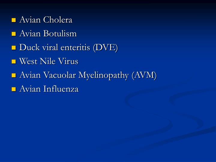Avian Cholera