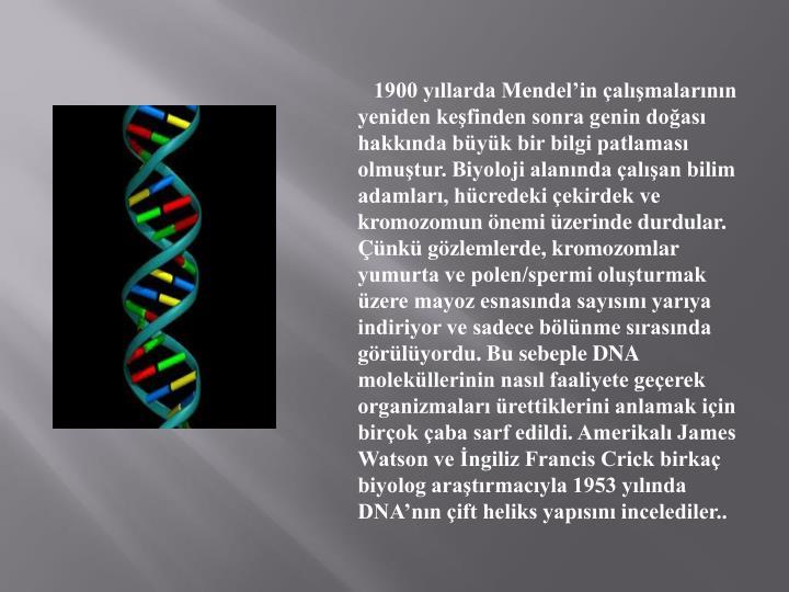 1900 yıllarda Mendel'in çalışmalarının yeniden keşfinden sonra genin doğası hakkında büyük bir bilgi patlaması olmuştur. Biyoloji alanında çalışan bilim adamları, hücredeki çekirdek ve kromozomun önemi üzerinde durdular. Çünkü gözlemlerde, kromozomlar yumurta ve polen/spermi oluşturmak üzere mayoz esnasında sayısını yarıya indiriyor ve sadece bölünme sırasında görülüyordu. Bu sebeple DNA moleküllerinin nasıl faaliyete geçerek organizmaları ürettiklerini anlamak için birçok çaba sarf edildi. Amerikalı James Watson ve İngiliz Francis Crick birkaç biyolog araştırmacıyla 1953 yılında DNA'nın çift heliks yapısını incelediler..