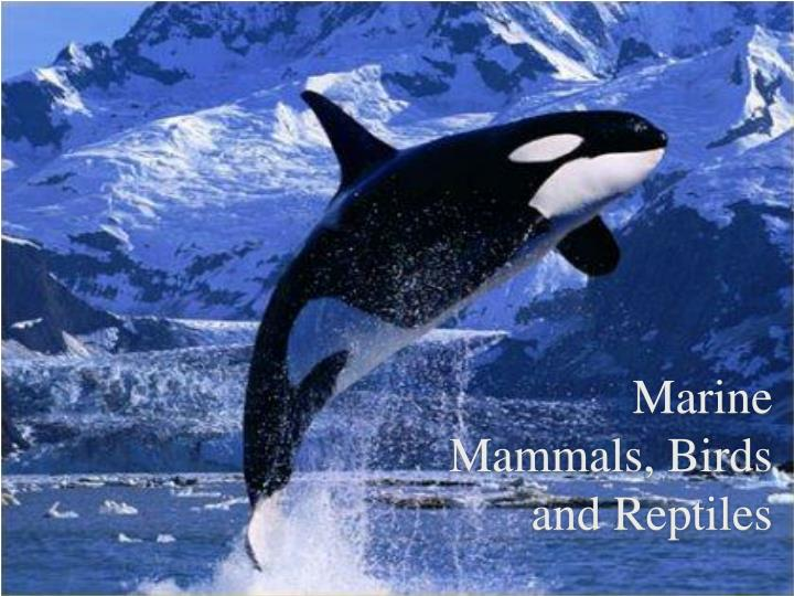 marine mammals birds and reptiles n.