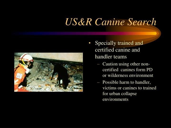 US&R Canine Search