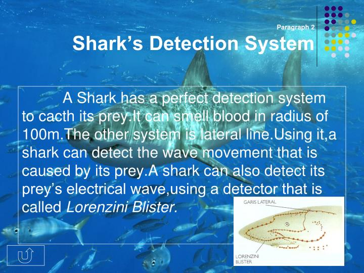 Paragraph 2 shark s detection system