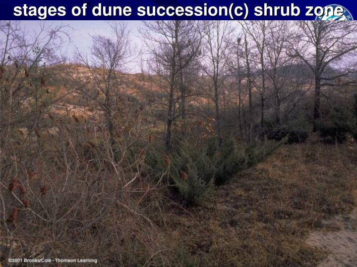 stages of dune succession(c) shrub zone