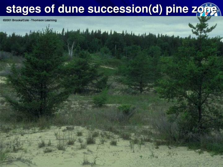 stages of dune succession(d) pine zone