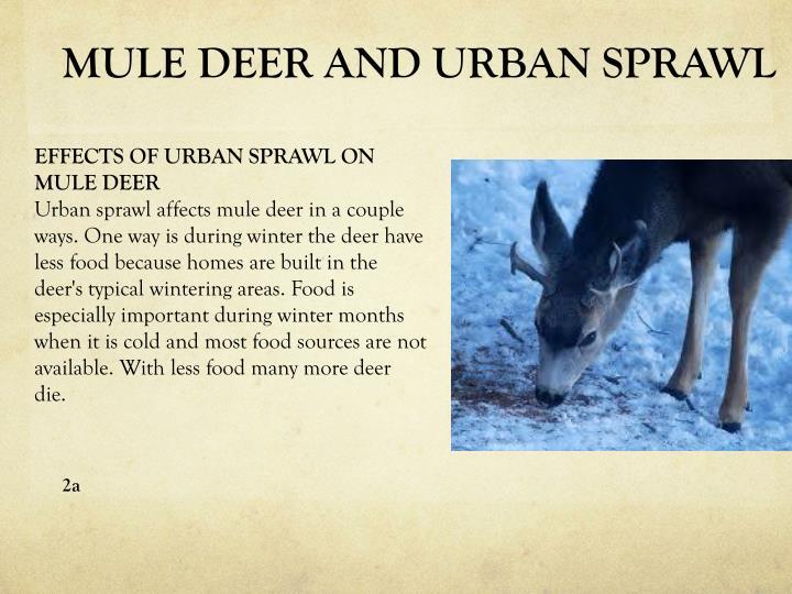 MULE DEER AND URBAN SPRAWL