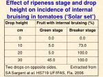 effect of ripeness stage and drop height on incidence of internal bruising in tomatoes solar set