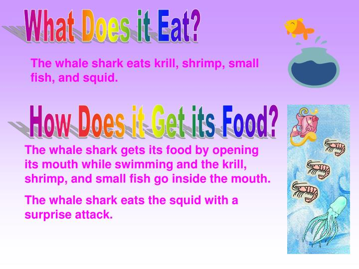 What Does it Eat?