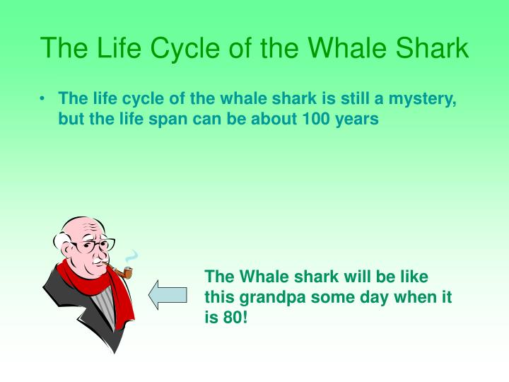The Life Cycle of the Whale Shark