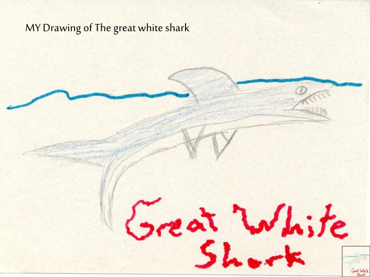 MY Drawing of The great white shark