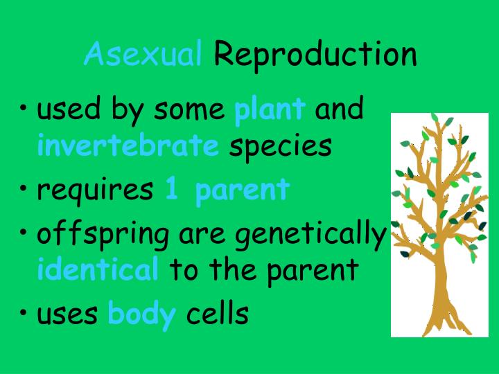 Asexual reproduction plants powerpoint templates