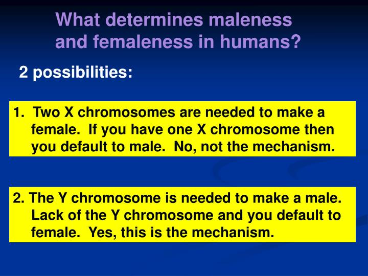 What determines maleness and femaleness in humans?