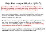 major histocompatibility loci mhc
