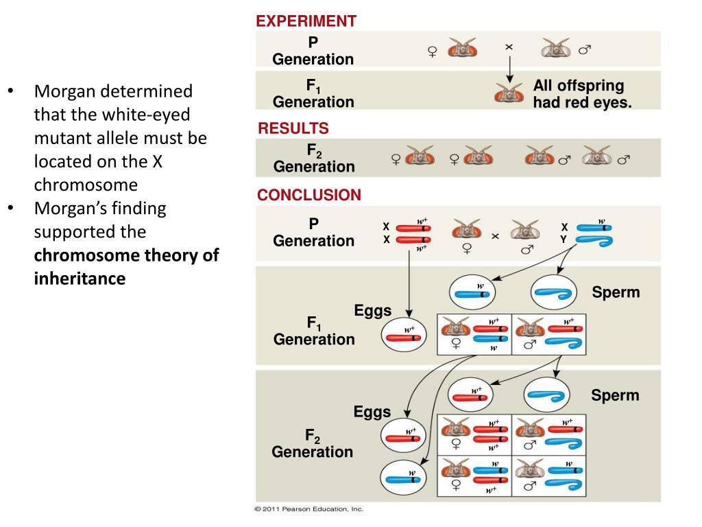 chromosomal basis of sex determination ppt in South Shields