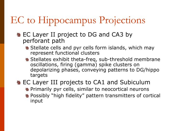 EC to Hippocampus Projections