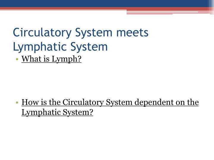 Circulatory System meets Lymphatic System
