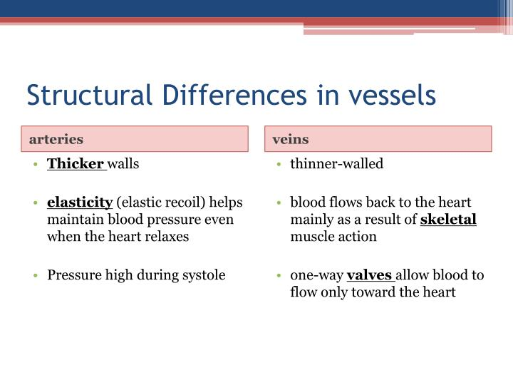 Structural Differences in vessels