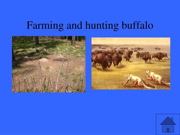Farming and hunting buffalo