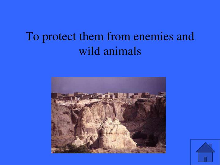 To protect them from enemies and wild animals