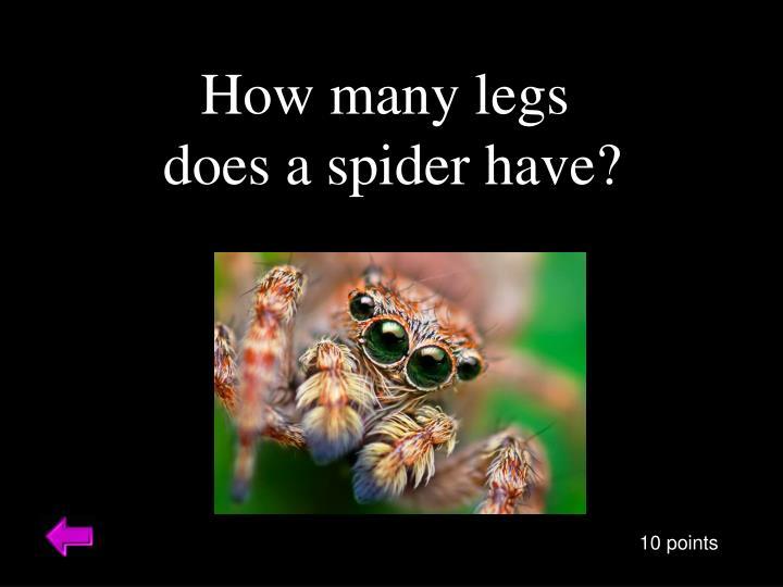 How many legs