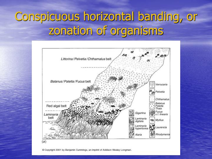 Conspicuous horizontal banding, or zonation of organisms