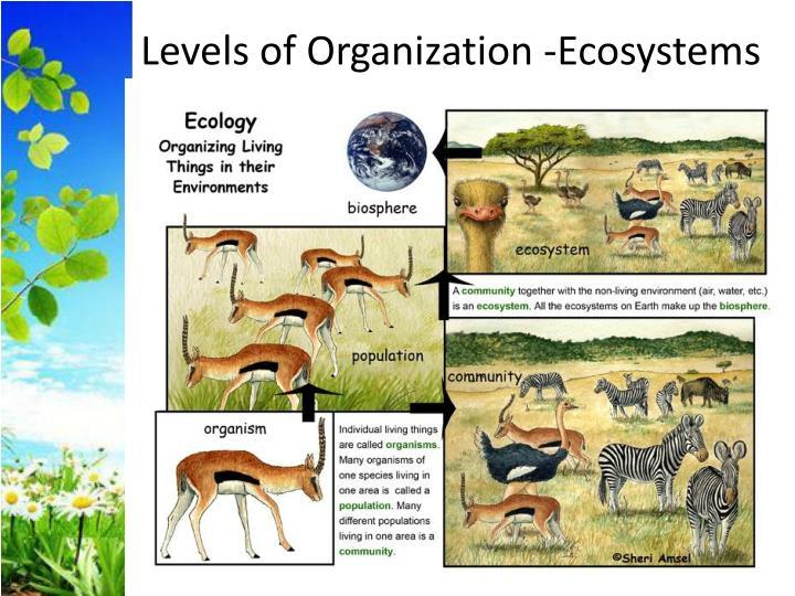 Levels of Organization -Ecosystems