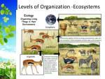 levels of organization ecosystems