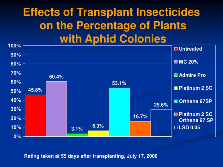 Effects of transplant insecticides on the percentage of plants with aphid colonies