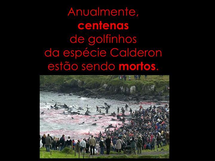 Anualmente centenas de golfinhos da esp cie calderon est o sendo mortos