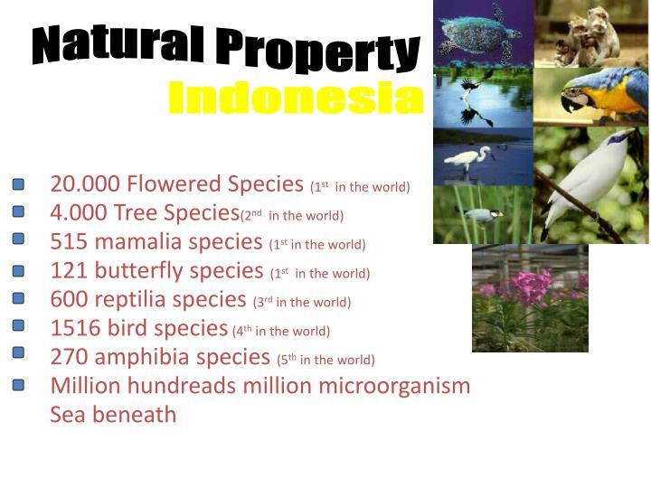 Natural Property