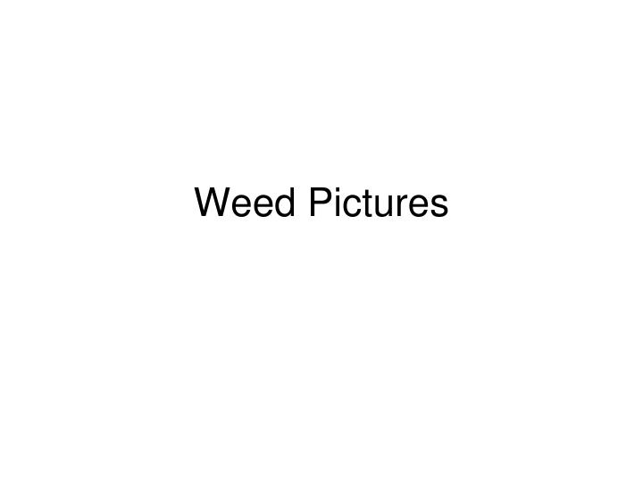 weed pictures n.