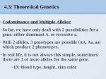 4 3 theoretical genetics20
