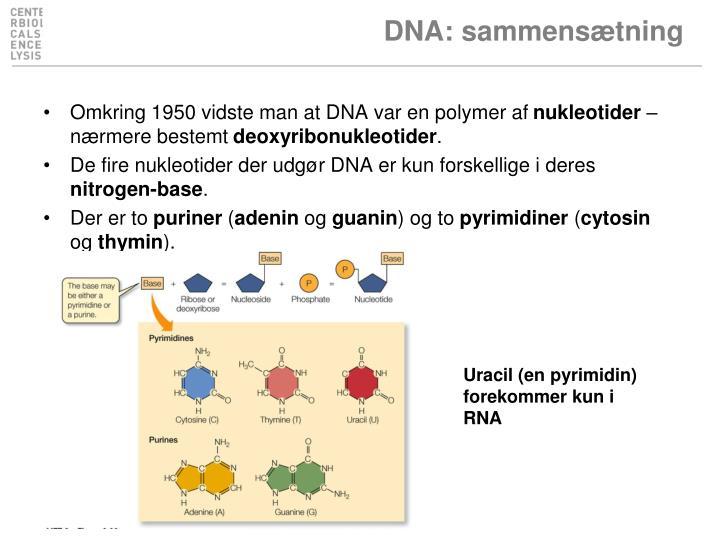 DNA: sammensætning